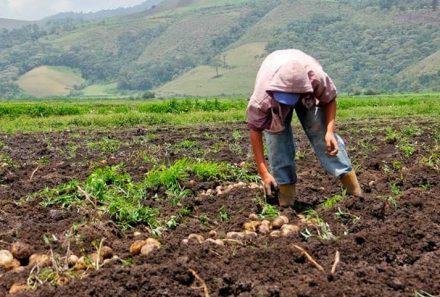 Fedeagro reporta cuantiosas pérdidas de alimentos por déficit de combustible