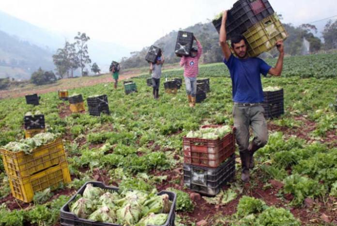 Fedenaga: Escasez de combustible hace imposible producir y distribuir alimentos